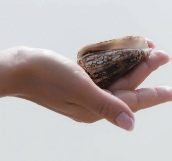 Cone Snail